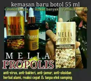 melia propolis new 1